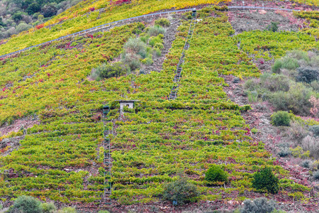 View vineyards, grapes, cottages and transport rails along river Sil. Looking at vineyards and forest above  Sil river on a boat excursion. Canyon de Rio Sil, Galicia, Spain. Home of famous Spanish vine. Stockfoto