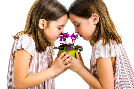 Identical twin girl are smelling viola flower green pot. Little girls - children are smelling flowers with closed eyes. Profile view, studio shot, isolated on white background.