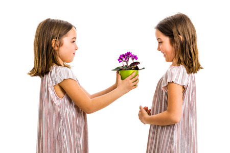 Identical twin girl giving viola flower pot to her sister. Little girl child is giving a gift or present of flowers to her sister. Profile view, studio shot, isolated on white background.