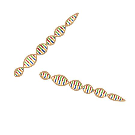 adn: ADN