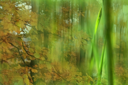 Background - grass and leaves Stock Photo - 16627273