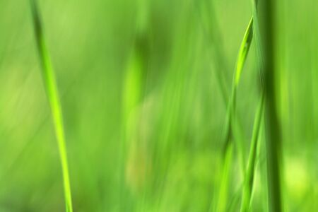 Background - tender grass Stock Photo - 16627265