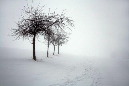 Winter en mist op de deelstaat Beieren, Duitsland Stockfoto