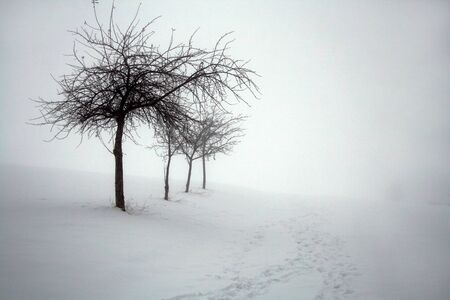 Winter and fog on the state of Bavaria, Germany