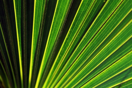Light and Shadow - Close up of a palm leaf Stock Photo - 16671008