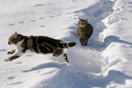Cats have fun in the snow