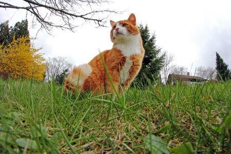 The red cat from the perspective of mice Stock Photo - 16770431