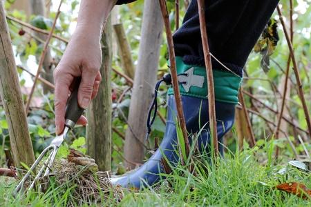 Gardening and Unkrautj�hten