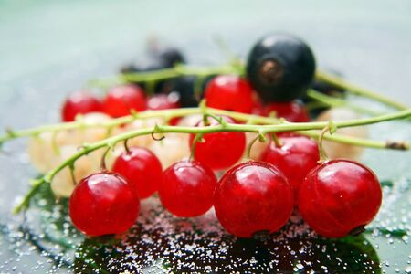 Red, white and black currants Stock Photo