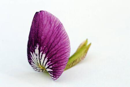 Still Life - a pretty lily leaf Stock Photo - 16865637