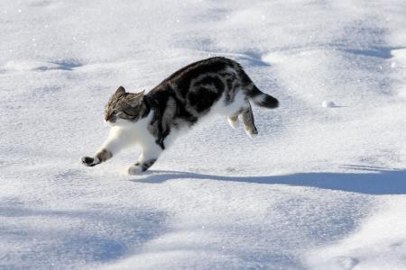 Katten hebben plezier in de sneeuw