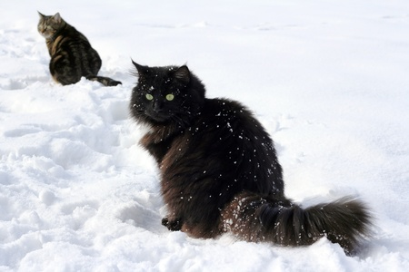 Cats have fun in the snow photo