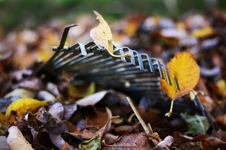 A raking leaves in autumn foliage