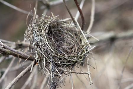 나무에 새의 둥지