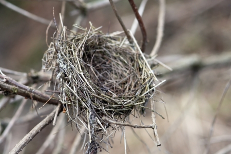 live again: A bird s nest in a tree Stock Photo