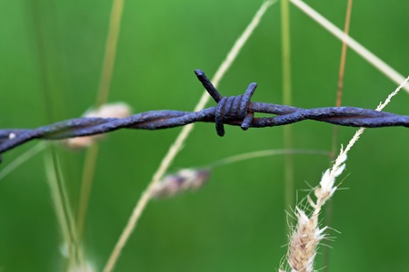 The barbed wire in the green field