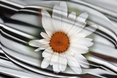 Background - The flower in metal Stock Photo - 17049752