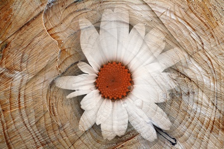 Digiart - The flower in the tree photo