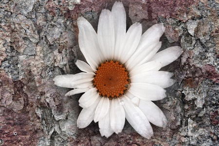thaler: Digiart - The Flower in the tree