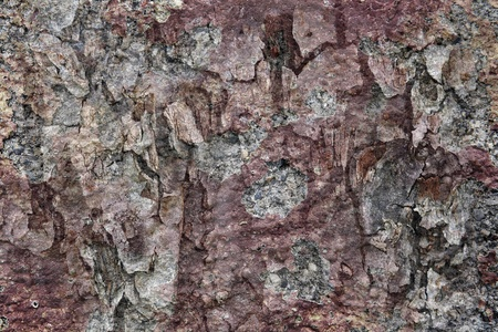 thaler: Background - The bark of a tree and metal