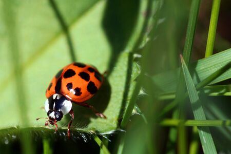 A ladybug on a leaf Stock Photo - 17092677
