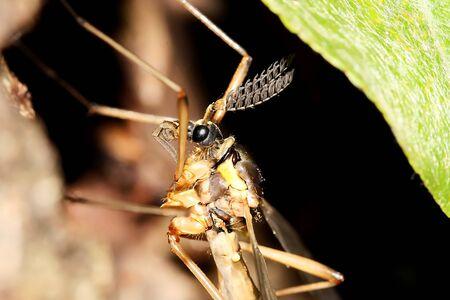 A mosquito with strange sensors Stock Photo - 17123327