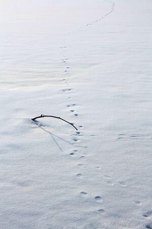 animal tracks: Tracce degli animali su un snowscape incontaminata Archivio Fotografico