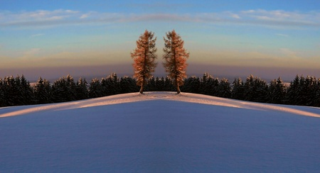 Fairyland - twin trees in a winter landscape Stock Photo - 17360052