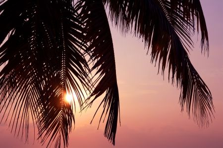 Sunset behind palms photo