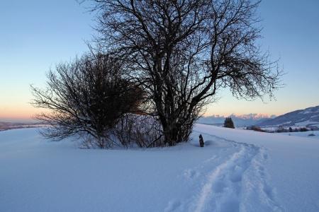 With snowshoes through the evening winter landscape Reklamní fotografie