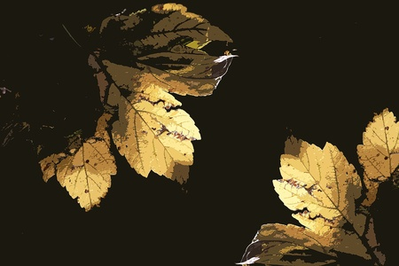 The fall with its golden leaves Stock Photo