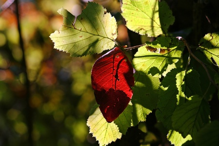 Fall, with its red and gold leaves Stock Photo - 17682230