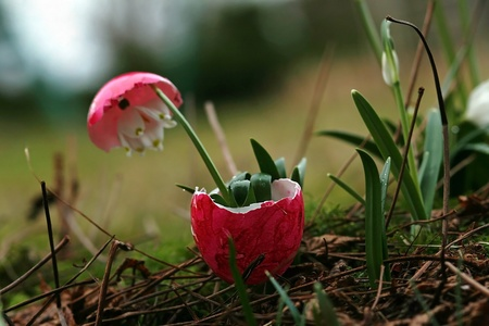 exceptionally: An unusual Easter egg with flowering content Stock Photo