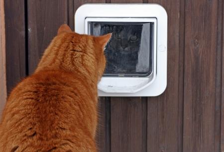 Een nieuwsgierige blik van het kattenluik