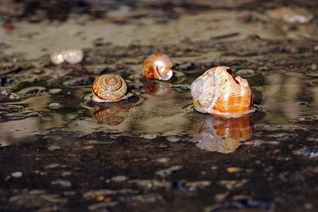 eau de pluie: L'eau de pluie et des coquilles d'escargot