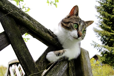 Young cat perched on the fence