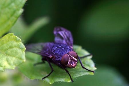 A fly sits on a leaf