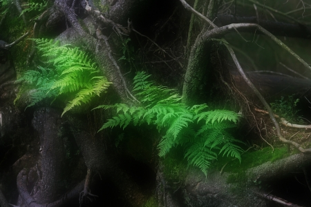 Green fern leaves in the fairy forest photo