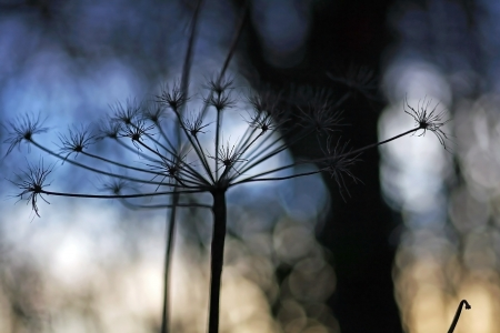 A dried plant in autumn evening light