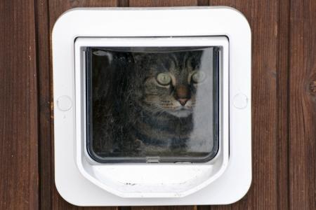 Een kat zit achter het kattenluik en kijkt naar buiten