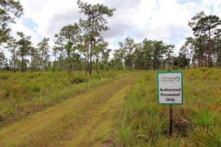tierschutz: Tierschutz und Naturschutz in den S�mpfen von Florida