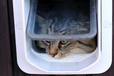 A cat goes through the cat flap Standard-Bild
