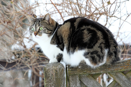 Young cat on a fence photo
