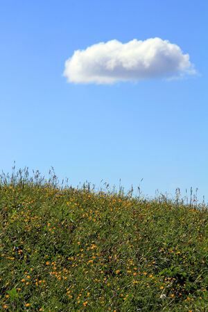 float cotton cloud: A white cloud over the flowering meadow Stock Photo