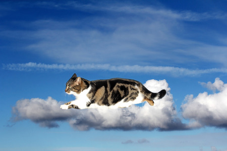 float cotton cloud: Digiart - A cat walking on clouds Stock Photo