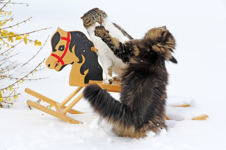 two cats argue about a rocking horse Stock Photo - 27335466