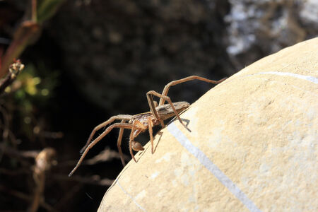 A garden wolf spider on the hunt Stock Photo