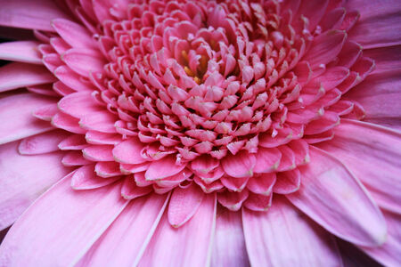 Close-up of a pink flower Stock Photo