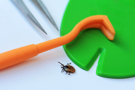 The correct removal of ticks
