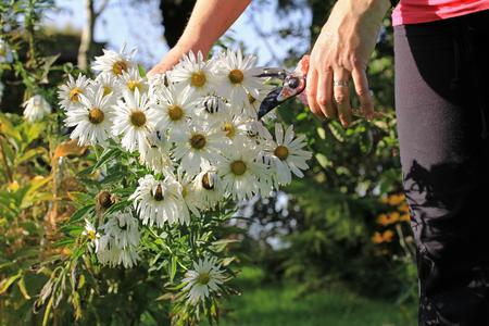 gartenanlage: Gardening in autumn